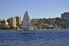 Sydney harbour sailing Royalty Free Stock Image