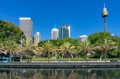 Sydney horisont på sommardag med palmtrees Arkivfoton
