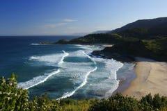 Sydney-königlicher Nationalpark lizenzfreie stockfotografie