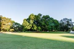 SYDNEY - Oktober 12: Sydney Royal Botanic Garden på Oktober 12, 2017 i Sydney Royaltyfria Foton