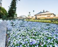 SYDNEY - Oktober 12: Sydney Royal Botanic Garden på Oktober 12, 2017 i Sydney Arkivbilder