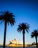 Sydney opera house with palm tree view Stock Photography