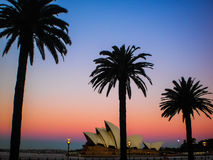 Sydney opera house with palm tree Stock Image