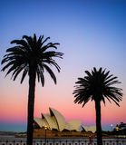 Sydney opera house with palm tree Stock Photo