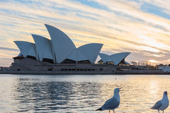 Sydney Opera House at sunrise in Sydney Australia. NOV 11,2016 The Sydney Opera House is a famous arts center.Over 10 millions tourists visit Sydney a year Royalty Free Stock Image