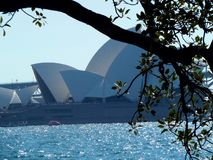Opera house. Sydney opera house viewed from botanical gardens stock image