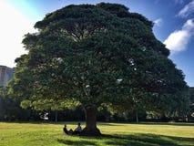 Sydney pary drzewny park obrazy stock