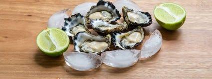 Sydney Rock Oyster. Freshly shucked Sydney Rock Oyster Royalty Free Stock Photography