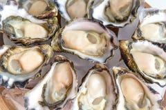 Sydney Rock Oyster. Freshly shucked Sydney Rock Oyster Royalty Free Stock Photo