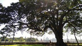 Sydney Royal Botanic Garden Stockfotos