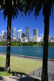 Sydney skyline. Palm trees silhouette in front of sydney skyline Royalty Free Stock Images
