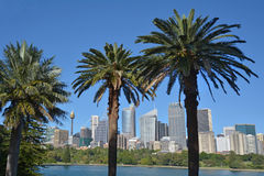 Sydney skyline as view from the Royal Botanic Gardens Sydney New Royalty Free Stock Photo