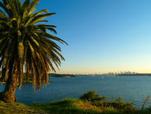 Sydney skyline with palmtree. View over the ocean with the skyline of Sydney in the background Stock Image