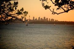 Sydney sunset Royalty Free Stock Image
