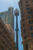 Sydney Tower Immagine Stock Libera da Diritti