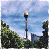 Sydney Tower Stockfotografie