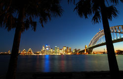 Sydney tropics panorama. Black palms in foreground, famous sydney scenery in background, night shot Royalty Free Stock Photo