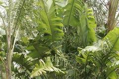 Sydney-tropische Palmen. Stockbilder