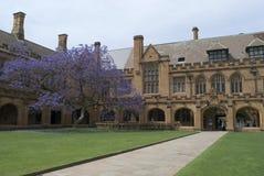 Sydney University Quadrangle. Gothic revival architecture at sydney university, australia Royalty Free Stock Photography