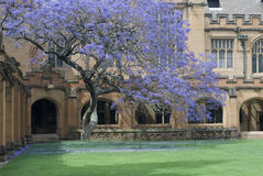 Sydney University Quadrangle. Gothic revival architecture at sydney university, australia Royalty Free Stock Photos