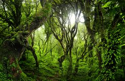 Sydostlig asiatisk djup djungel fotografering för bildbyråer