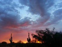 Sydvästlig Arizona kaktus & monsunsolnedgång Royaltyfri Foto