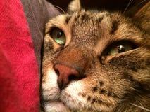 Syga den oförskräckta Tabby Cat Arkivbild