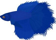 Syjamska ryba, ilustracyjna siamese ryba odizolowywająca Fotografia Stock