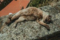 Syjamskiego kota k?ama? u?piony na kamiennym parapet zdjęcia royalty free