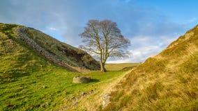 Sykomor Gap på Hadrians vägg i Northumberlanden Royaltyfri Fotografi