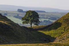 Sykomor Gap på Roman Wall Northumberland England royaltyfri foto