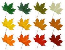 Sykomorblad Ställ in i olika färgskuggor Arkivfoton