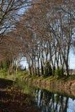 Sykomorträd längs kanalen du midi arkivbilder