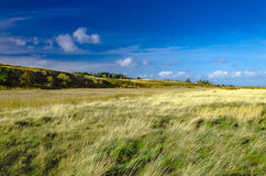 Sylt near Kampen. Gras and heath landscape near Kampen, Sylt island Royalty Free Stock Photo