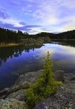 Sylvan lake. The tree on top of the rock in sylvan lake south dakota with blue sky Royalty Free Stock Photo