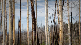 Sylvan pass. Trees have been burned on the Sylvan Pass, Yellowstone National Park royalty free stock photos
