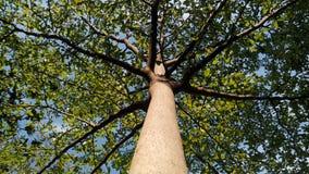 Sylvan. Tree in garden Royalty Free Stock Images