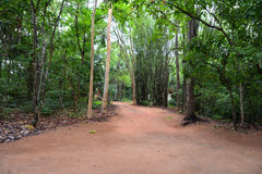 The sylvan way of jungle Stock Images