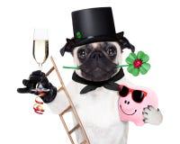 Sylvesterabende Hund Lizenzfreies Stockbild