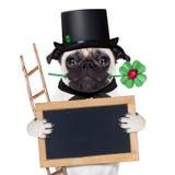 Sylvesterabende Hund Stockfoto