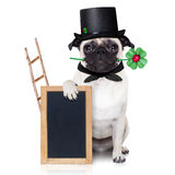 Sylvesterabende Hund Stockfotografie
