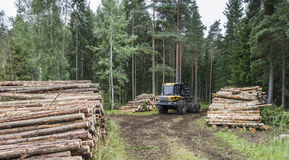 Sylviculture en Finlande images stock