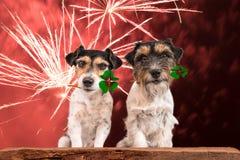 Sylwesteru pies Jack Russell Terrier - pomyślność łodzie - obrazy stock
