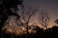 Sylwetek drzewa abstrakcjonistyczni zdjęcia stock