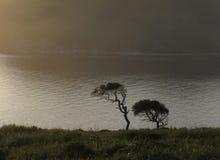sylwetek drzewa dwa Obrazy Royalty Free