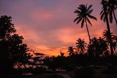 Sylwetek drzewa, słońca położenie i morze, Fotografia Royalty Free