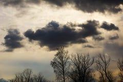 Sylwetek gałąź z niebem Zmierzch Tło dla projekta Wierzchołki drzewa dramatyczny niebo i chmury Zdjęcie Stock