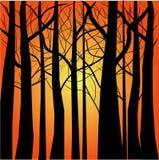 sylwetek susi drzewa ilustracji