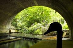 Sylwetka łabędź pod mostem - Virginia Nawadnia Obrazy Royalty Free