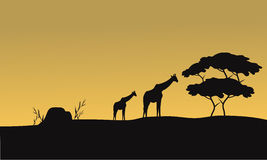 Sylwetka żyrafa i drzewo Obraz Royalty Free